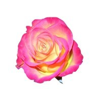 土耳其玫瑰精油
